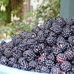 Fabulous fruity pickings – get our favourite 5 blackberrying sites in Cambridge