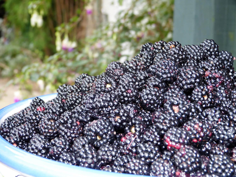 blackberrying Cambridge