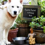 The 20 best dog-friendly pubs in Cambridge
