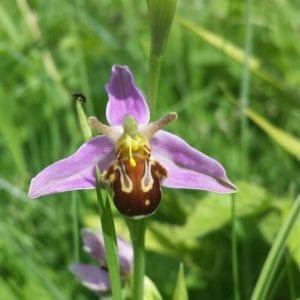 June orchid count scuseme