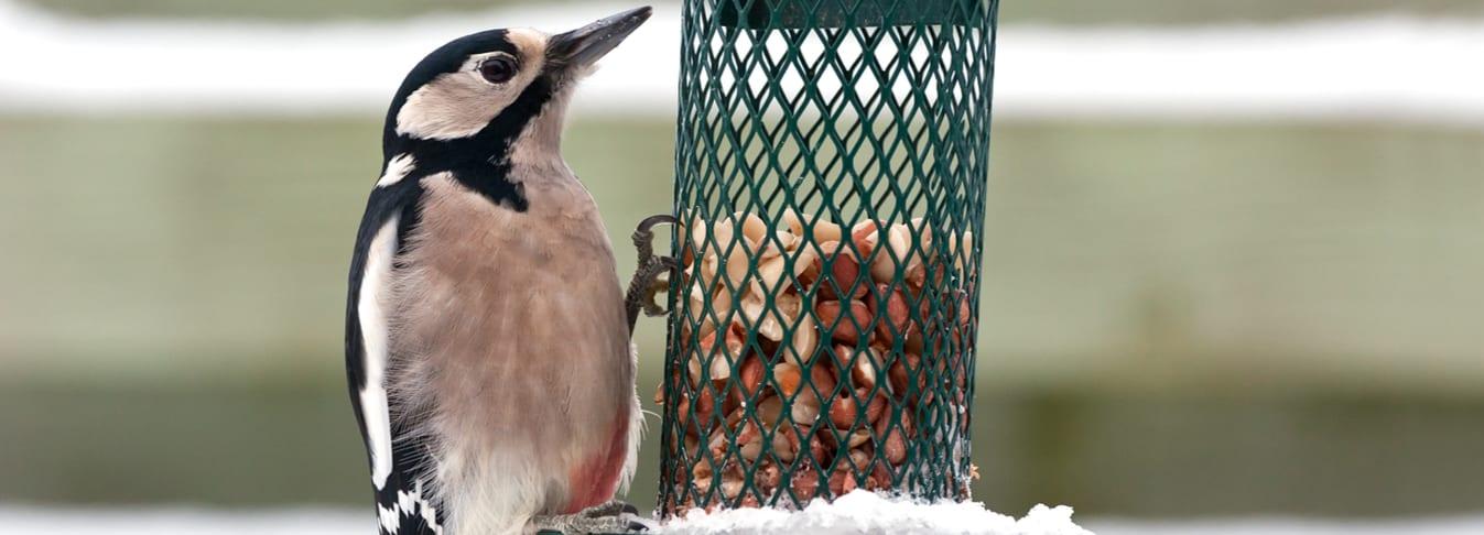 Look after garden birds in winter
