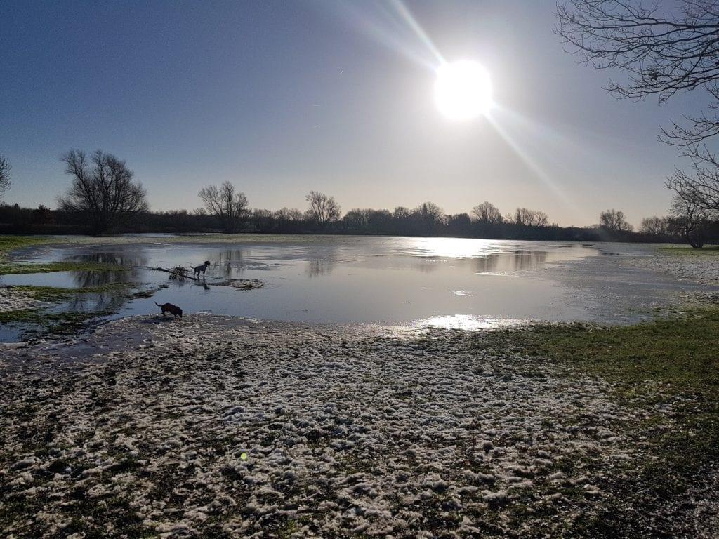 dog walks in Cambridge scuseme