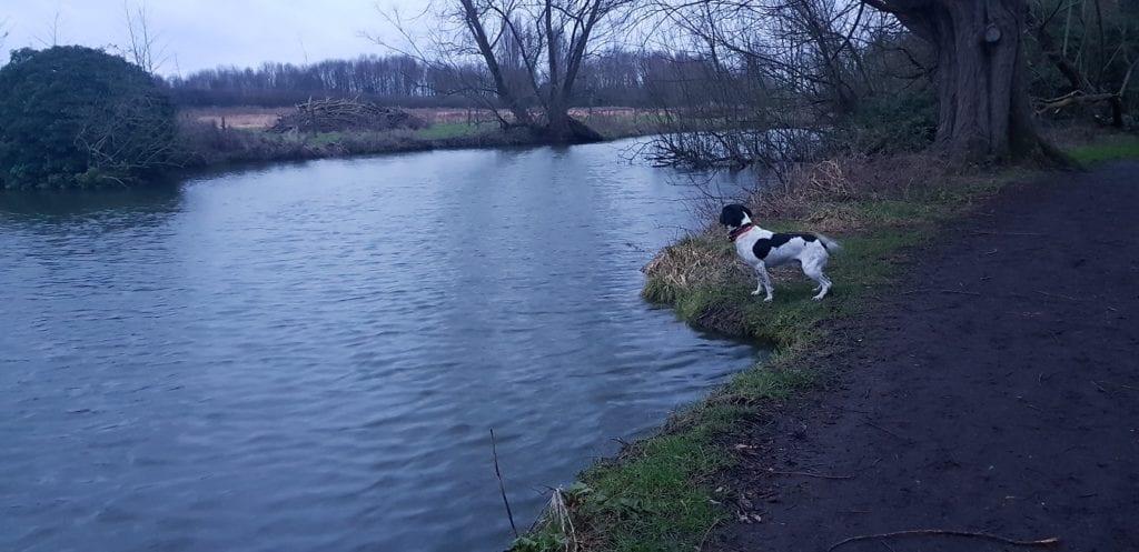dog walks in Cambridge