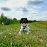 15 beautiful dog walks in and around Cambridge
