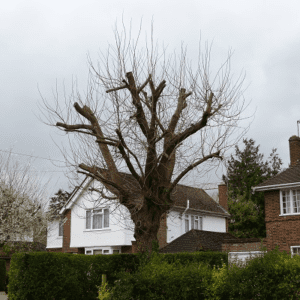 protect your home from storms - trees