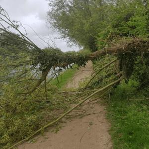 storm damage tree